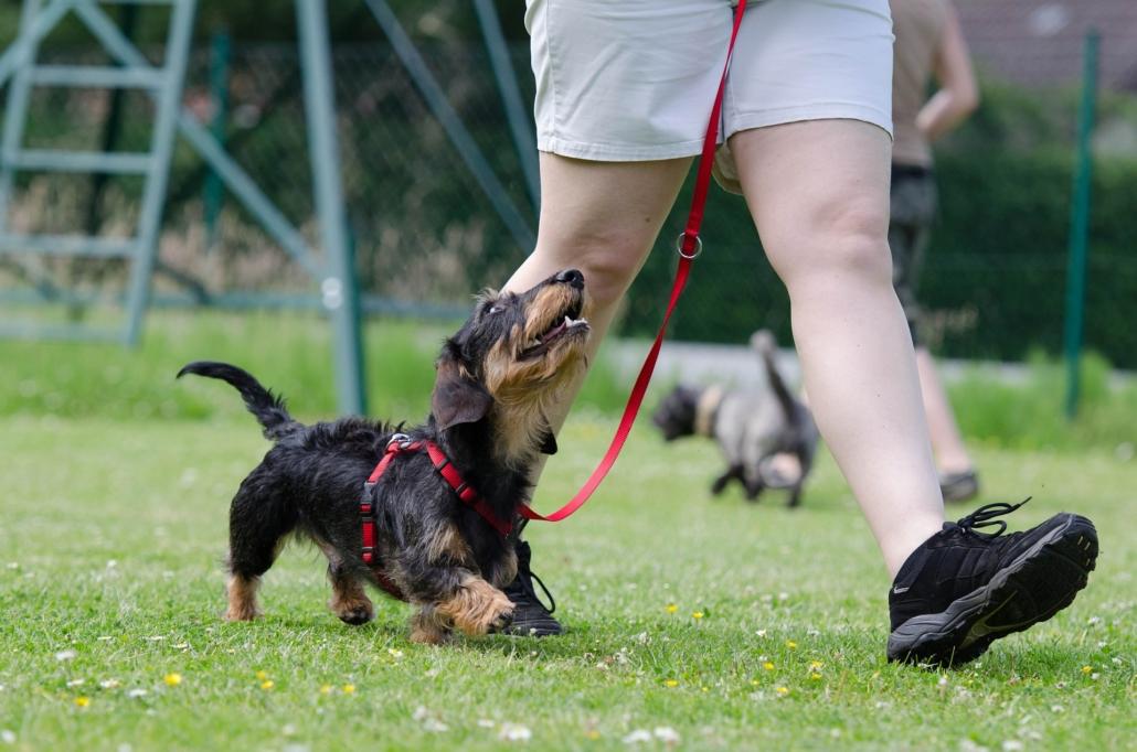 Familiehundetræning